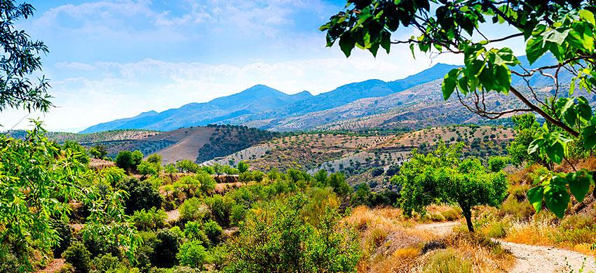 Cosa visitare nei dintorni di Granada